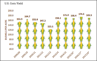 It is a fact: The corn crop is huge