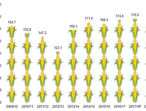 Corn Could Reach Record Yield