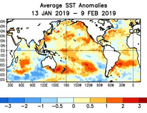 Cocoa arrivals & El Niño update