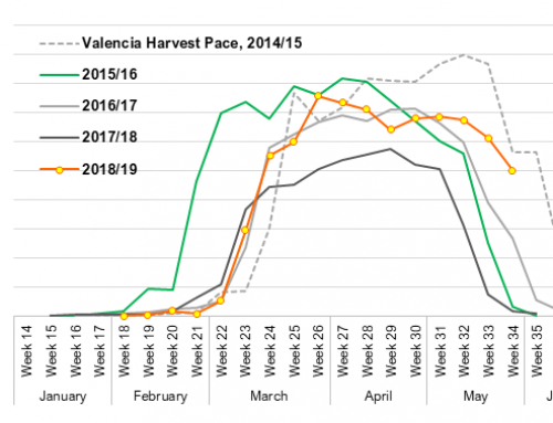 Florida Valencia harvest enters final stretch