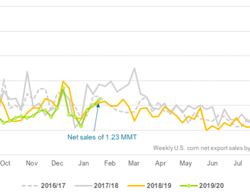 Net U.S. corn export sales reach six-week high
