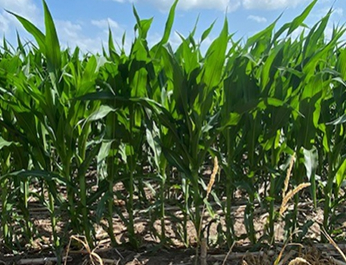 Crop tour 2020:  Day 1, Nebraska