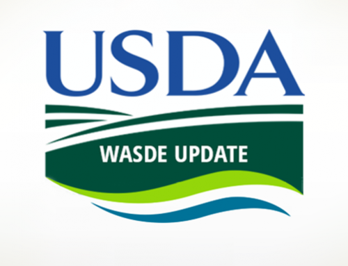 WASDE: Corn carryout drops, soybean carryout steady