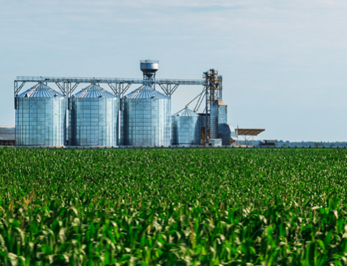 Corn market awaits acreage, stocks reports