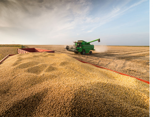More sales, more bullishness for soy complex