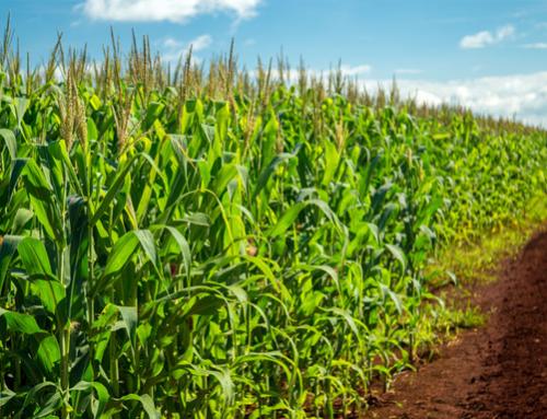 Corn acreage shocks the market