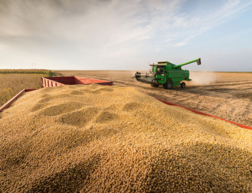 2019/20 soybean stocks raised to 620 million