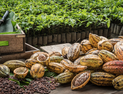 Technicals signal cocoa futures are overbought