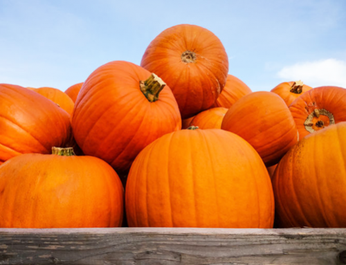 Great pumpkin harvest expected for 2020
