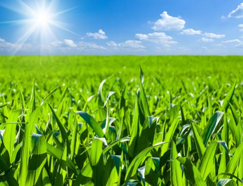 WASDE & weather maintain volatility in corn market