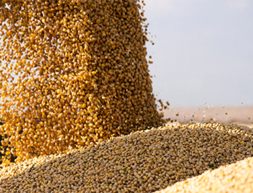 Soybeans correct after soaring higher on bullish WASDE