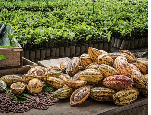 Midcrop discount undercuts LID premium across Ivory Coast