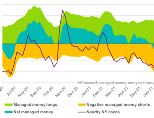 Speculative funds liquidate half their cocoa positions