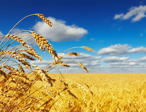 September WASDE is quiet for wheat