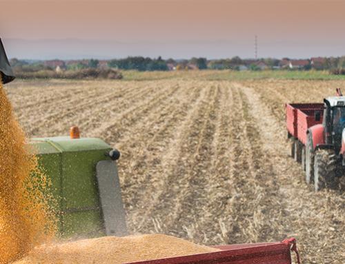 Corn futures edge lower ahead of WASDE