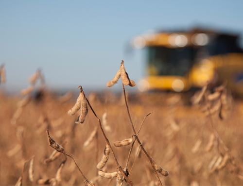 Soybean & soybean oil futures move in opposite directions